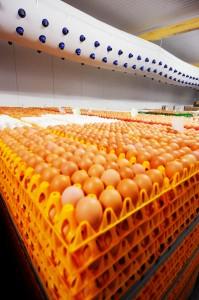 Eier-Lager Lebensmittel CAT 3000 Schlauchbelüftung Umluft