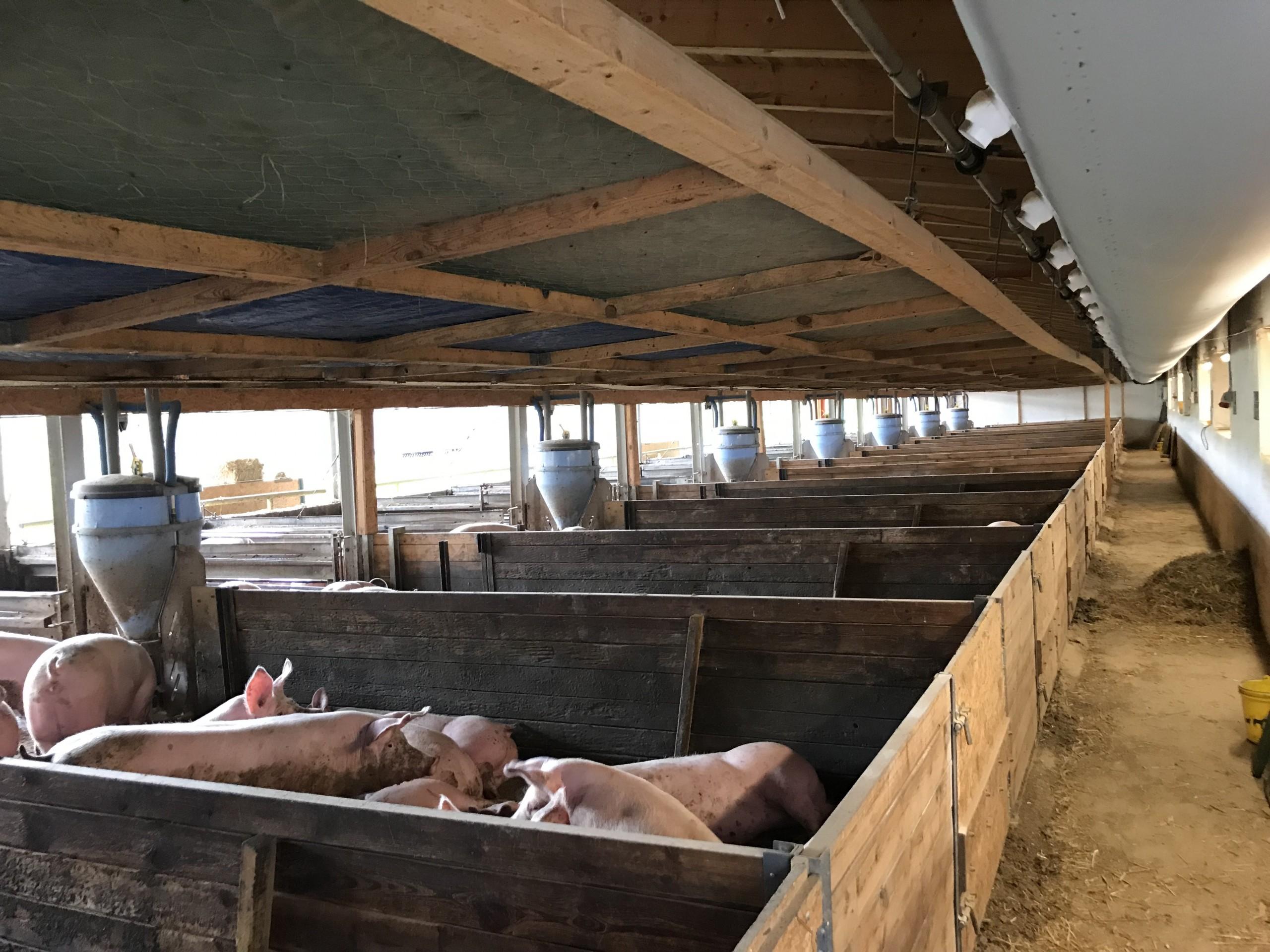 Schlauchbelüftung - Schlauchlüftung Schweinemast Dr. Knopf & Oswald GmbH
